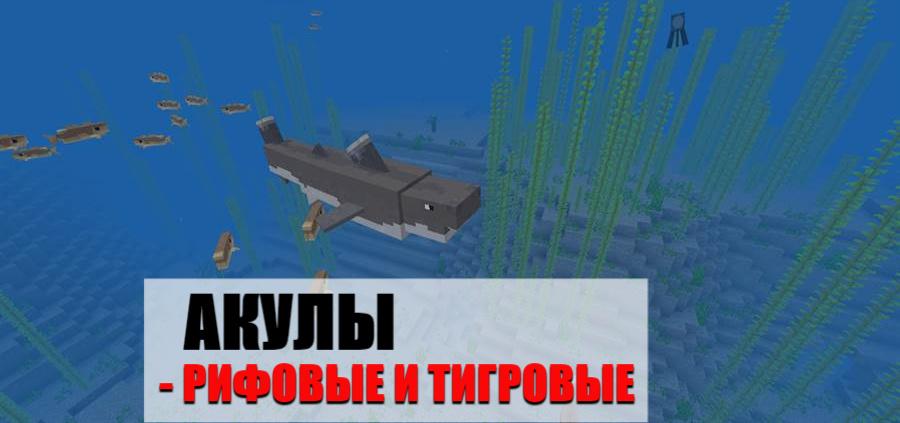 Мод на акул на Minecraft PE