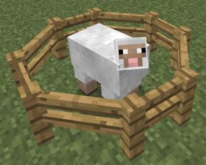 Овца в загоне