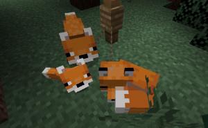 Размножение лис